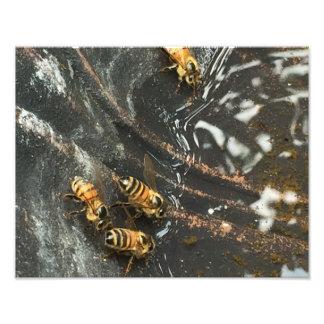 Bee Bath Photo Print