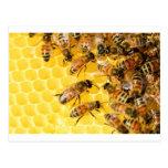 Bee Bees Hive Honey Comb Sweet Dessert Yellow Postcard