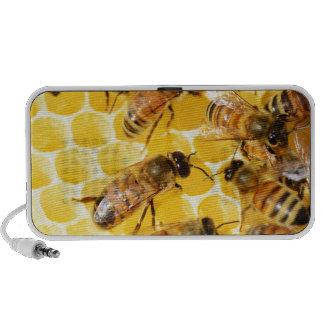 Bee Bees Hive Honey Comb Sweet Dessert Yellow Travel Speaker