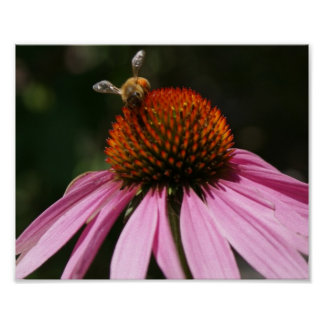 Bee Buzz 10x8 Poster