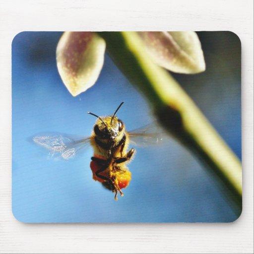 Bee Buzzing Around The Lemon Tree On My Balcony Mousepads
