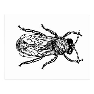 bee-clip-art-3 postcards