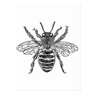 bee-clip-art-4 post cards