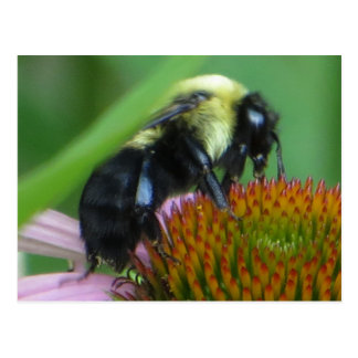 Bee Close Up Postcard