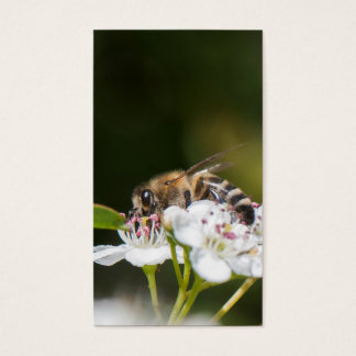 Bee collects pollen business card