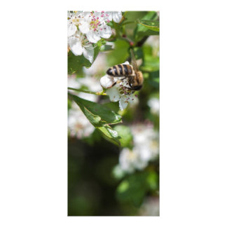 Bee collects pollen rack card