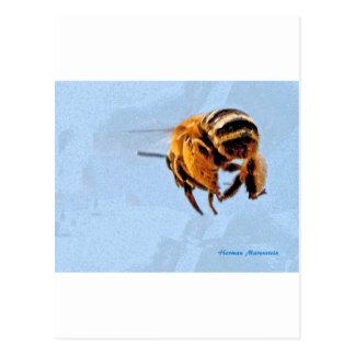 bee d postcard