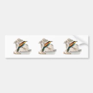 Bee Eater Bumper Sticker