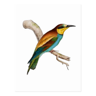 Bee Eater Postcard