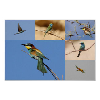 Bee-eaters Collage Poster