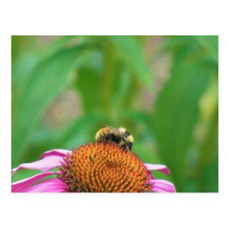 Bee Echinacea Postcard