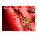 Bee fact Postcard / Bee on a watermelon