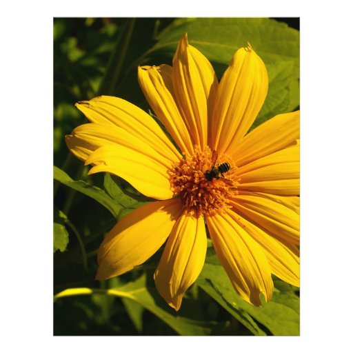 "Bee Flower 8.5"" X 11"" Flyer"