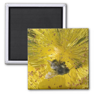Bee & Flower Magnet