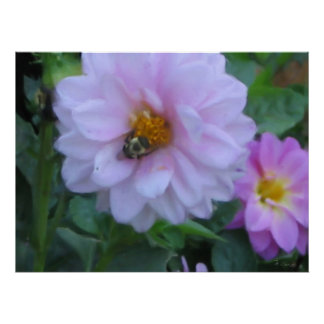 Bee Flowers Poster