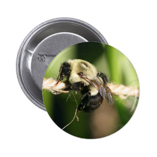 Bee Hanging Onto Twine Pinback Button