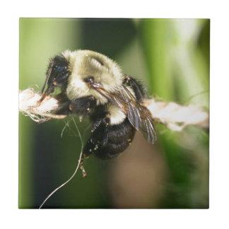 Bee Hanging Onto Twine Tiles