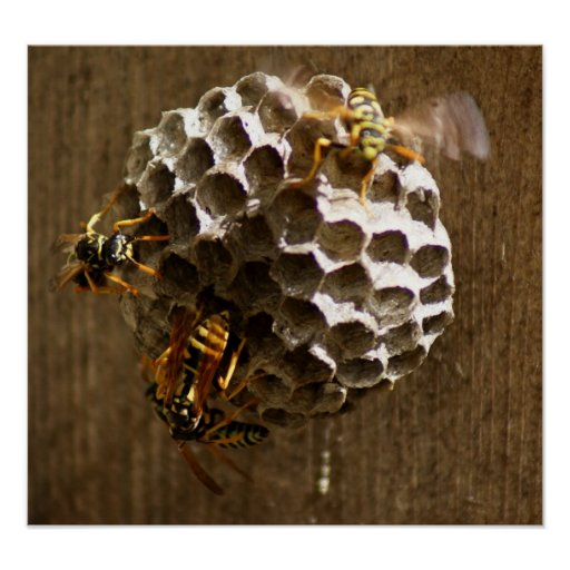 Bee Hive Buzz 18 x 16 Poster