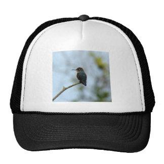 Bee Hummingbird Hats