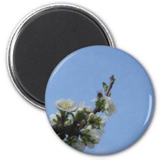 Bee impollinates flowers of plum tree magnet