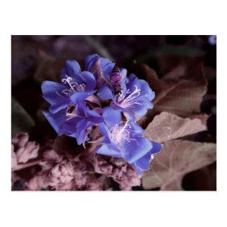 bee in blue flowers colorized purple postcard
