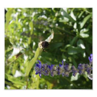 Bee in Flight Photographic Print