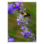 Bee in Lavender Greeting Cards