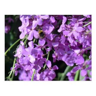 Bee in Summer Lilac at Erddig Hall Postcard