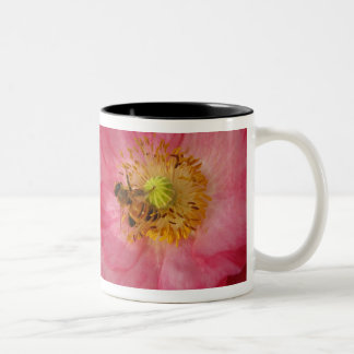 Bee in the Poppy Two-Tone Coffee Mug