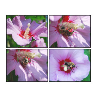 Bee in the Rose of Sharon Canvas Print