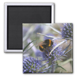 Bee in thistle 2 inch square magnet