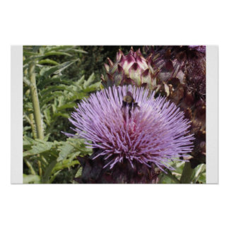 Bee in Thistle Poster