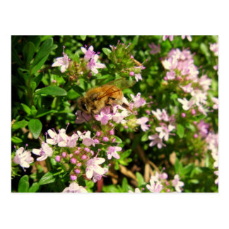 bee in thyme postcard
