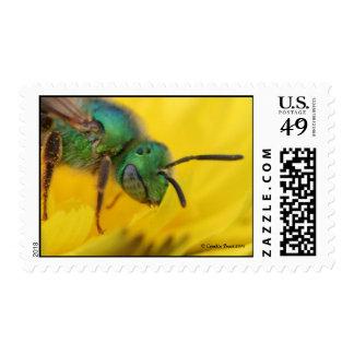 Bee-Jeweled Sunshine Stamps