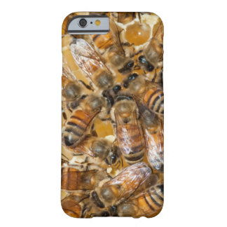 Bee keeping at Arlo's Honey Farm Barely There iPhone 6 Case