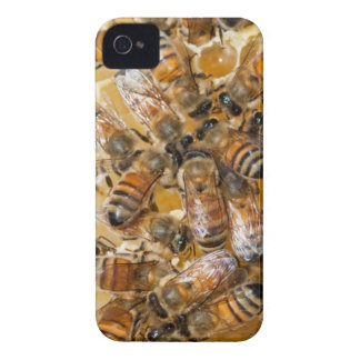 Bee keeping at Arlo's Honey Farm iPhone 4 Case-Mate Case