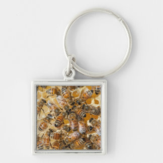 Bee keeping at Arlo's Honey Farm Silver-Colored Square Keychain