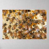 Bee keeping at Arlo's Honey Farm Poster