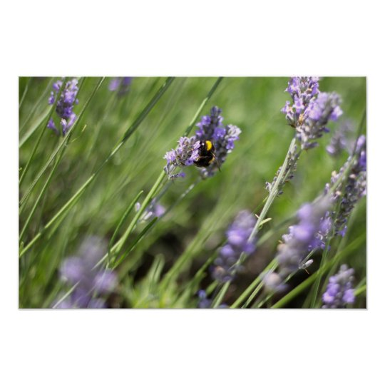 Bee & Lavender - Poster