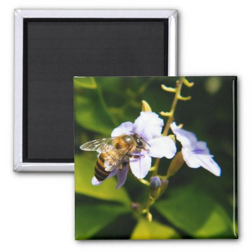 Bee My Honey 2 Inch Square Magnet