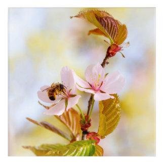 Bee On A Cherry Flower Acrylic Print
