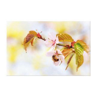 Bee On A Cherry Flower Canvas Print