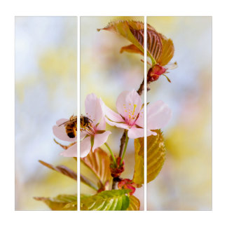 Bee On A Cherry Flower Triptych