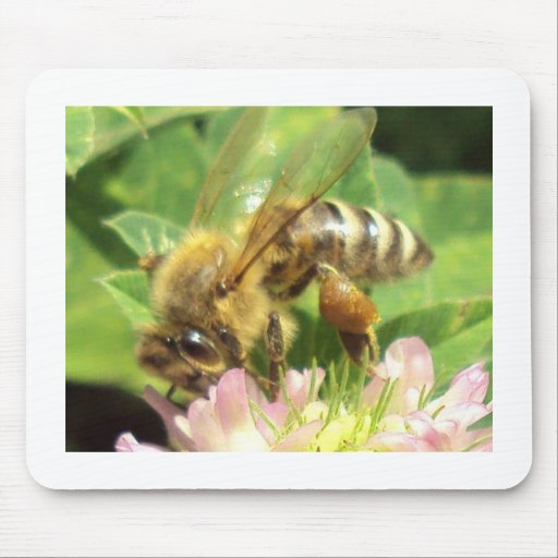 Bee on a Clover Mouse Pad