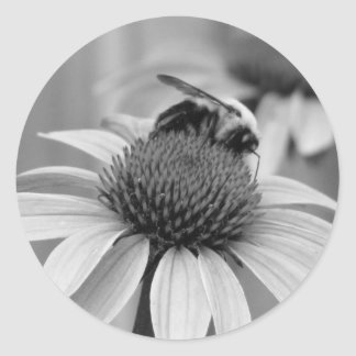 Bee on a Coneflower Classic Round Sticker