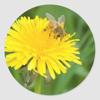 Bee on a Dandelion Classic Round Sticker