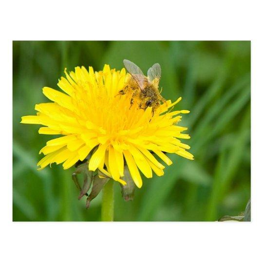 Bee on a Dandelion Postcard