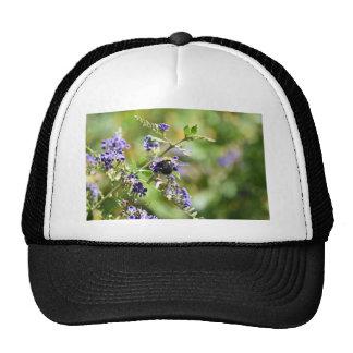 BEE ON A FLOWER IN RURAL QUEENSLAND AUSTRALIA TRUCKER HAT
