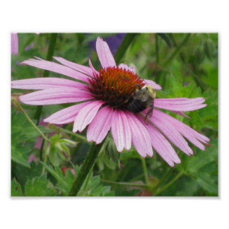 Bee on a Pink Wildflower Poster