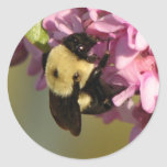 Bee on a Redbud Round Stickers